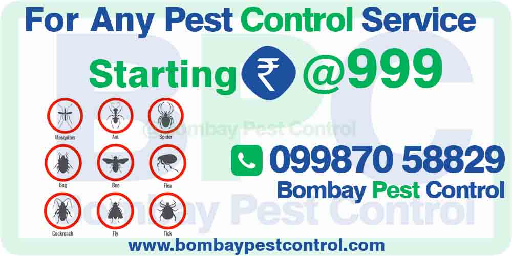 pest control in rabale